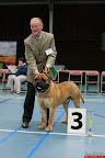20130511-BMCN-Bullmastiff-Championship-Clubmatch-1777.jpg