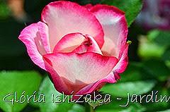 32 - Glória Ishizaka - Rosas do Jardim Botânico Nagai - Osaka