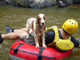 Pets adventure 16 (227)