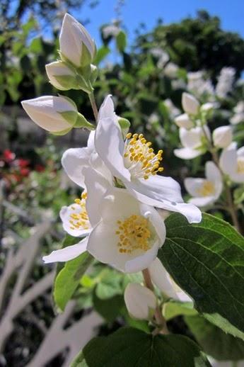 fleurs jardin nelson mandela