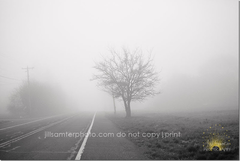 fog-5422