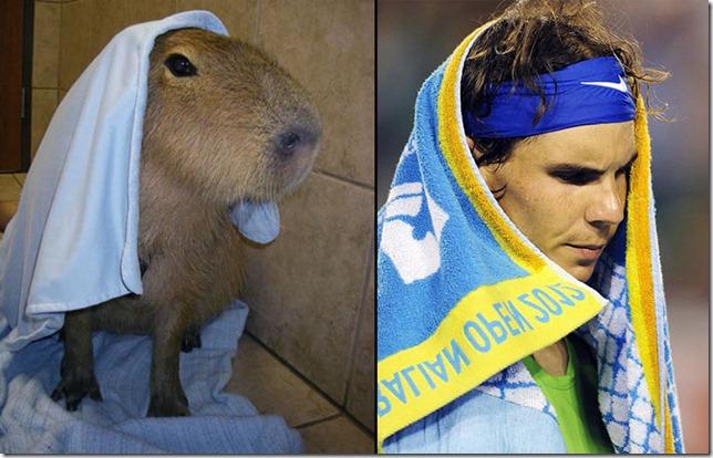 rafa nadal capibara (6)