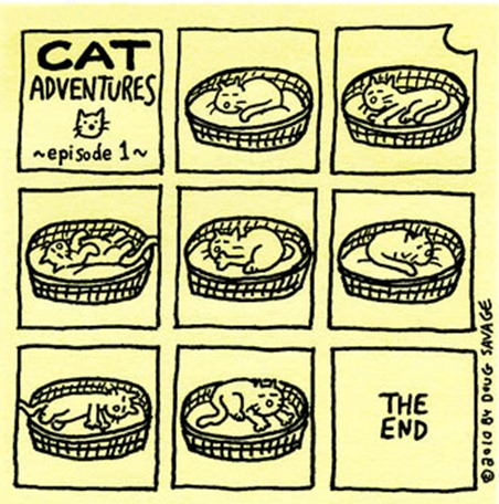 funny-pictures-cat-adventures