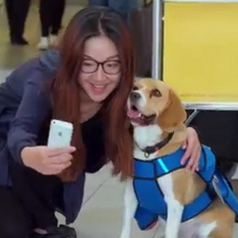 Perrito conquista a los usuarios de KLM