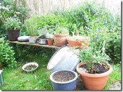 Mein kleiner aber feiner Kräutergarten
