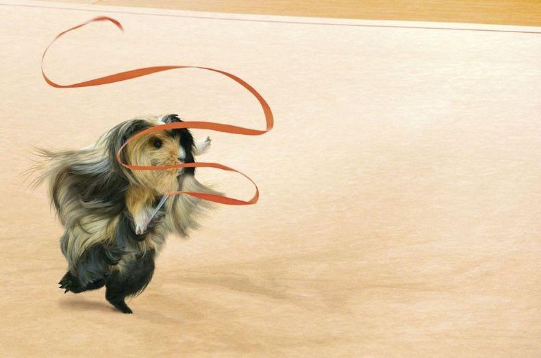 guinea-pig-games-10