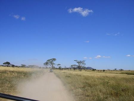 Safari: Serengeti