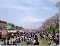 お花見2013 ③