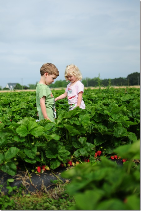 Strawberry Picking & Marcus band 002