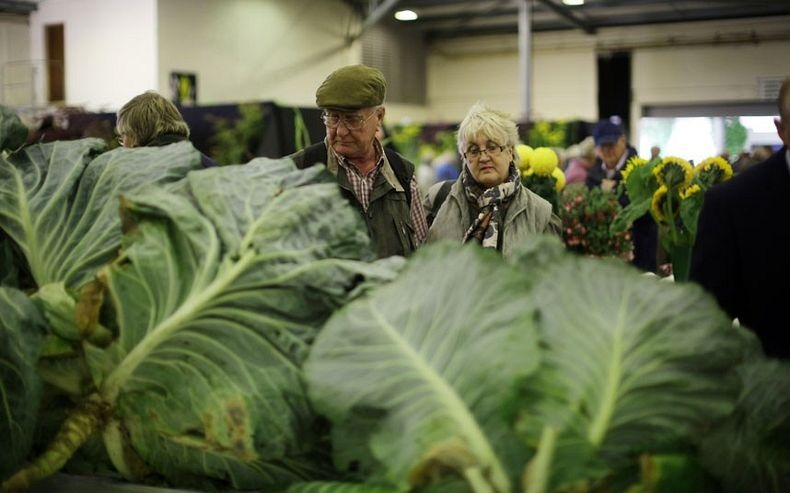 giant-vegetables-8
