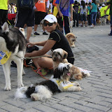 Pet Express Doggie Run 2012 Philippines. Jpg (258).JPG