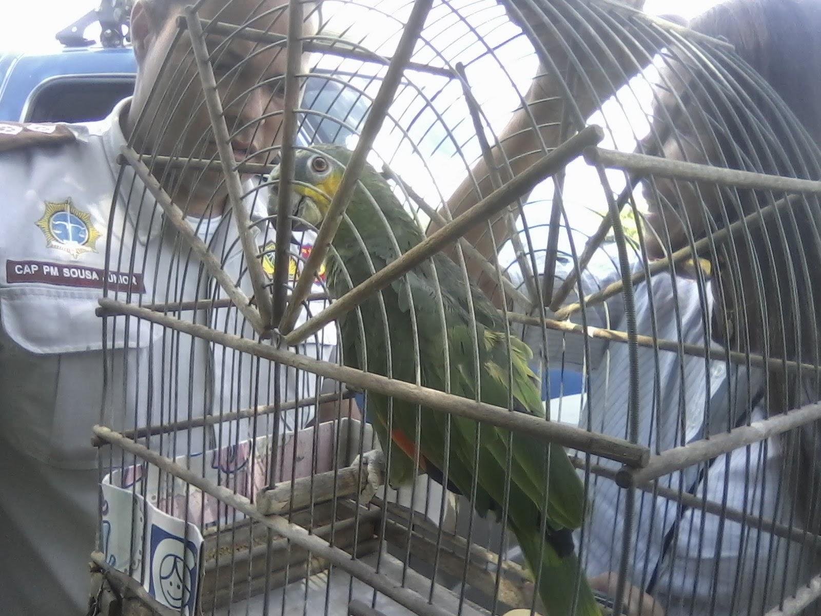 GUARDIÃO DO POVO: São Gonçalo: PM apreende pássaros ameaçados de  #4D617E 1600x1200