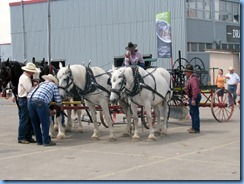 0320 Alberta Calgary Stampede 100th Anniversary - Draft Horse Town part of Big Shoe Show