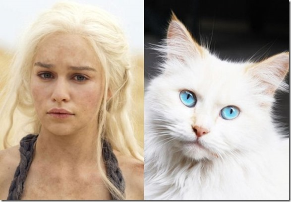 cats-game-thrones-9