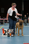 20130510-Bullmastiff-Worldcup-0206.jpg
