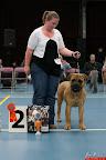 20130510-Bullmastiff-Worldcup-0206.jpg