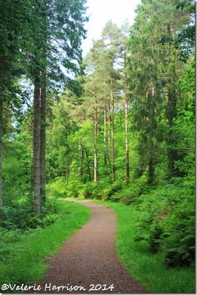10-dalbeattie-forest
