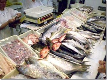 Como saber se o peixe está fresco - O peixe está bom?