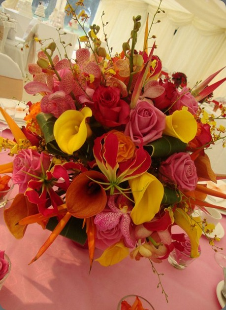 164893_491526501991_4683307_n love lily