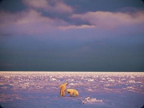 Polar Obsession17