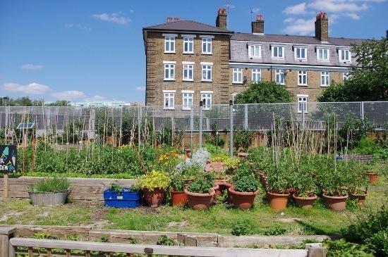city farm 2
