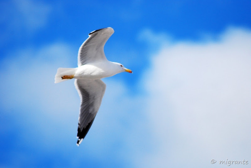 con las alas al viento - mallorca
