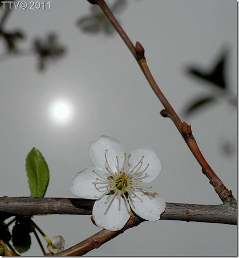 kukkia 038