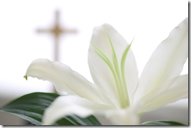 easter-lily-with-cross