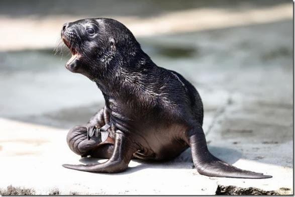 cute-baby-animals-5