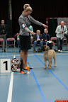 20130510-Bullmastiff-Worldcup-0162.jpg
