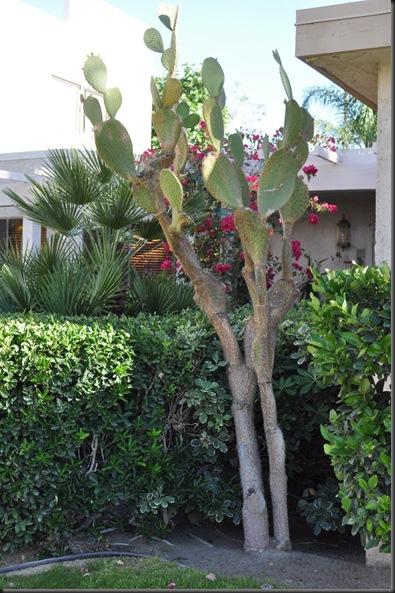 04-20-12 Palm Springs 23