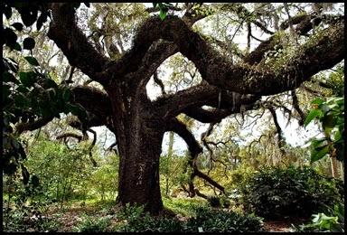 05d - trees