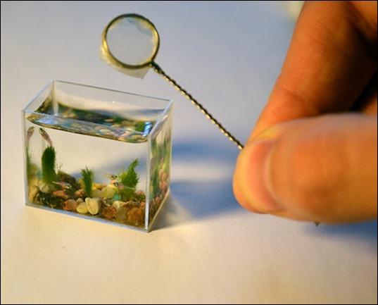 aquarium-minuscule