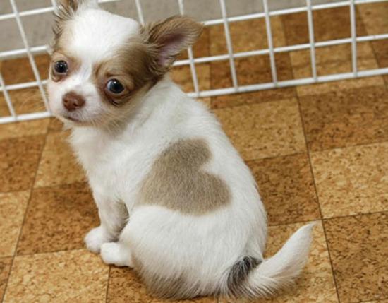 I Heart Puppy