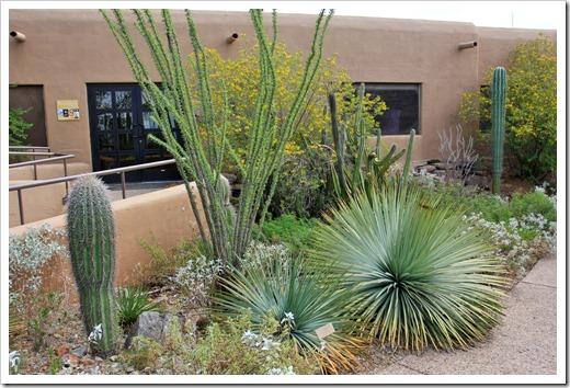 120728_ArizonaSonoraDesertMuseum_Yucca-whipplei_04