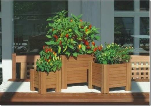 369638-Decoração-com-plantas-ajuda-a-refrescar-a-casa