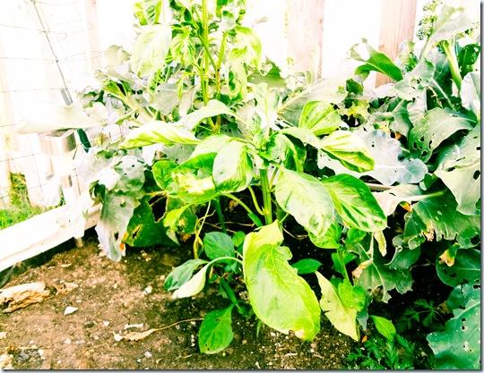 Garden July 17-7