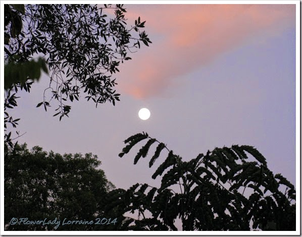 07-13-moon-setting-at-sunrise3