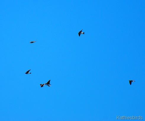5. flying-kab
