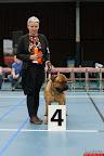 20130510-Bullmastiff-Worldcup-0395.jpg