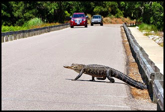 03a8d - Causeway- Gator crossing - Hope they slow down