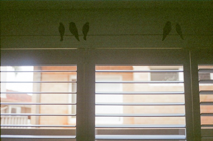 into my window mills