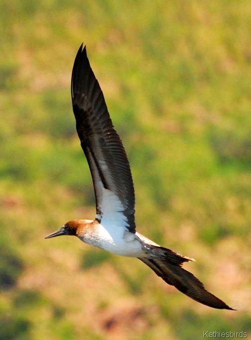 3. wing-kab