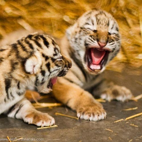 filhotes recem nascidos zoo zoologico desbaratinando animais lindos fofos  (47)