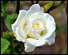 04f6 - Flowers in the Rose Garden
