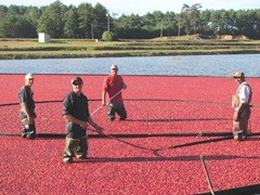 cranberry harvest josh ronnie kevin and G 9.20