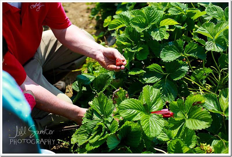 strawberryfields-4885
