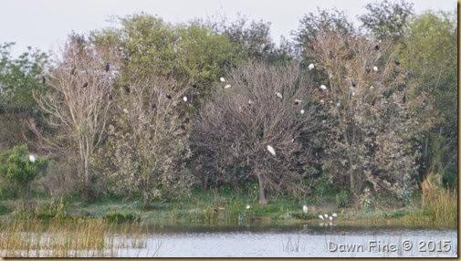 Viera Wetlands (71)