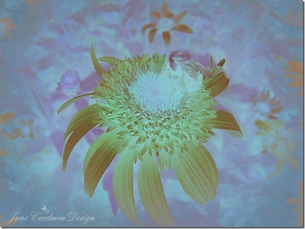 Bee_Clarity