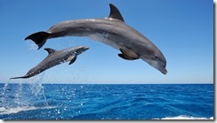 common_bottlenose_dolphins-1280x720